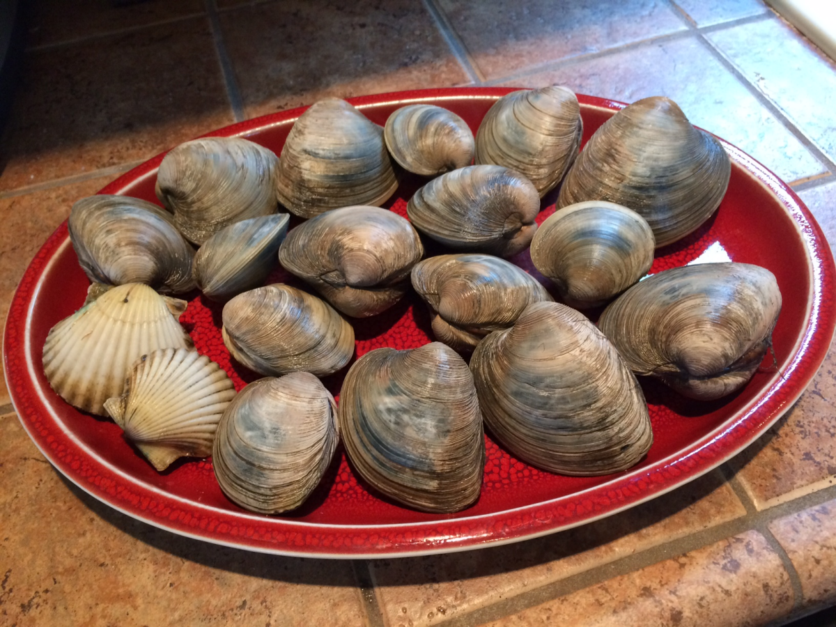 Freshly Harvested Clams